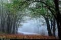 طبیعت پاییزی جنگل های گلستان و تصاویر دیدنی