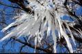 تصویر زیبای درخت یخ زده در خلخال